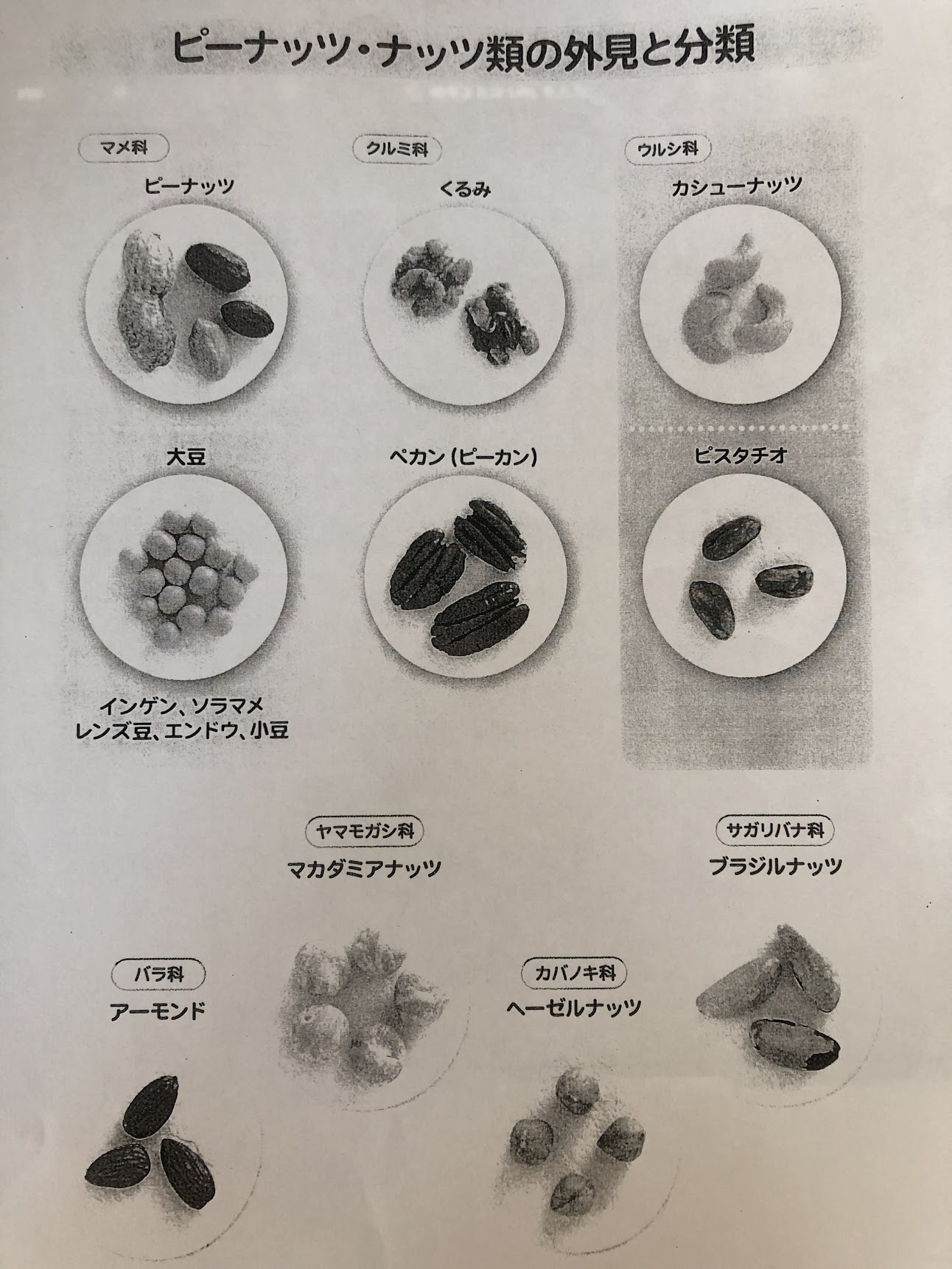 ピーナッツやアーモンドがどの「科」に属しているのかを記した表